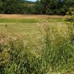 Fence Grass Web_Blog