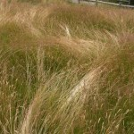 Sea_of_Grass_Web_Blog