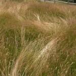 Sea_of_Grass_Web_Blog