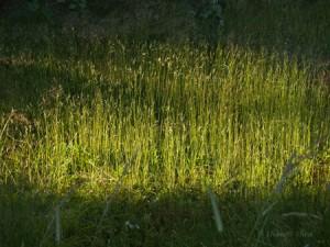 Zen_Grass_Blog
